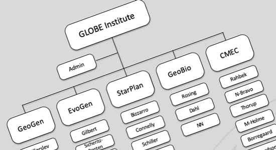 Organisation chart for Globe Institute